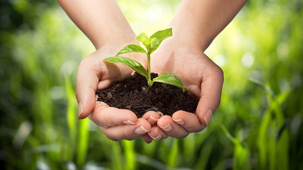 Some Factors That Makes a Good Gardener.